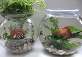 origami-fishbowl-05.jpg