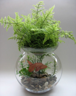 Plants for betta vase vases sale for Plants for betta fish vase