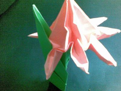 a new flower